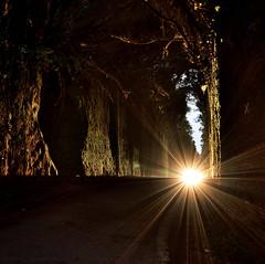 The mystery behind the light. (Beatriz-c) Tags: landscape paisaje light luz forest bosque mystery misterio road carretera nikon 5300