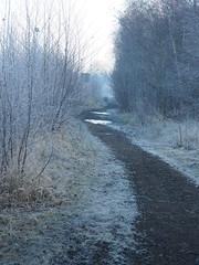 Manual Photos - Batch3-Jan1709 (greenby.nature) Tags: frozen frozenleaf rust rustedcars rustedengine moss frozenpuddles frostywalk sunthroughthetrees grass decayedsleepers
