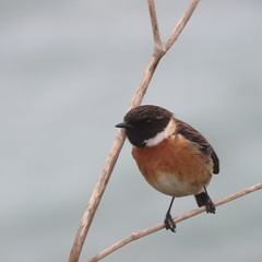 138 (jesust793) Tags: pájaros ´birds naturaleza nature