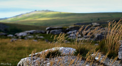 Granite and Grass, Dartmoor, UK. (ronalddavey80) Tags: dartmoor uk granite landscape moorland depth field colourful canon 70d efs1585