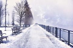 Fifty shades of white (David Anghelone) Tags: vieux port montréal canada nikond810 50mm neige brouillard snow froid polaire route way arbre tableau blanc 50 nuances de blancs sky fog frozen