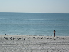 23-12-2016 Last Day at Madeira 3 (s.kosoris) Tags: skosoris pentaxoptiowg1 wg1 pentax madeira madeirabeach beach sand ocean atlanticocean gull gulls bird birds people dad