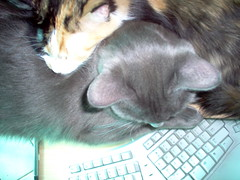 Topside Pusher (Jessicarabbit1313) Tags: cat calico greycat weebles wobbles