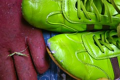 gardening shoes and glove (Craig Sefton) Tags: green contrast shoes colorful loveit glove colourful