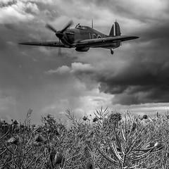 POP0055 (Smart Aviation Art) Tags: poppy poppies poppyfield poppyfields lancaster vulcan avro spitfire hurricane aircraft military bbmf