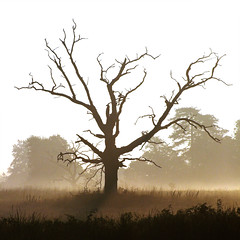 An icon (Kevin Day) Tags: uk england mist tree sunrise dead death dawn august deadtree slough berkshire kevday langley langleypark interestinness cmcolors chtk