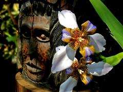 Flowers for a Silent War - IV (carf) Tags: life flowers brazil nature brasil garden inmemory death hope community hummingbird gardenofeden esperana social totem spirits jardim totempole indians elton beijaflor ecbf