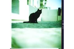 lomo cat (bastet in the sky with diamonds) Tags: cats black 120 film cat mediumformat lomo xpro crossprocess acid ant pussy ground lubitel felino felini groundlevel terra gatto pussycat gatti formica micio gatta mici pellicola antview aterra prospettivaformica valentinacinelli