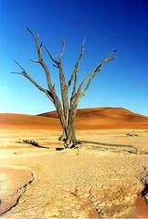 Dsert de Namibie (Nomad Photography) Tags: blue orange tree topv111 wow catchycolors wonder dsert thesource namibie