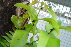Anglų lietuvių žodynas. Žodis bee-garden reiškia n bitynas lietuviškai.