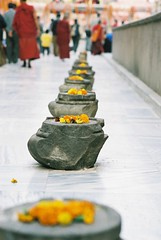 Lotus (Buddha's footprints)
