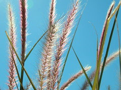 Grass (Feebert) Tags: ilikegrass naturesbeauty grass