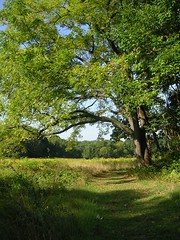 Walnut Tree - September (Valerie Craig (Val Ann)) Tags: 2005 park tree wow newjersey path walnut nj september tatum valann 123nj valfbjuly valann422