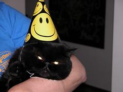 contrasts (arny johanns) Tags: cats cat hats contrasts hat birthday kitty kitten animal animals tinna kttur black beautiful pretty lovely kisa pet pets