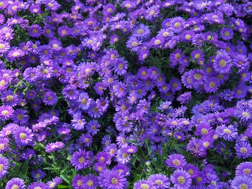 Quinta Flores. Flowers.. por Leley.