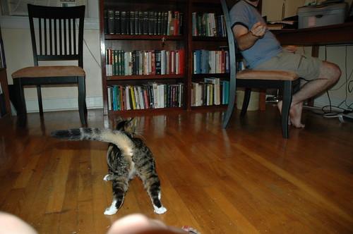 Internet, my cat's ass. Cat's ass, the internet.