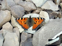 Cute Butterfly ... (balouch30) Tags: iran nature mountains
