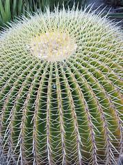 Cactus 4 - by Dey