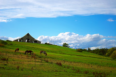 Keepers of Paradise (| HD |) Tags: ranch house 20d nature oregon canon landscape paradise farm southern hd darwish hamad hourse