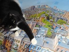 DSC03557 (bkerr) Tags: cat boston photomerge