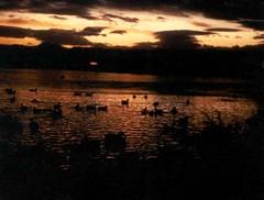 Ducks on Sloan's Lake at sunset (gem66) Tags: ducks sunset lake sloans colorado denver clouds water 35mm slide scan argusc3 kodachrome