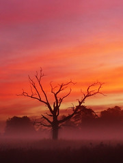 Pre Dawn tree (Kevin Day) Tags: uk original red england mist tree dawn britain deadtree untouched slough berkshire kevday predawn langleypark neatimage chromatag chromaorangered chtk