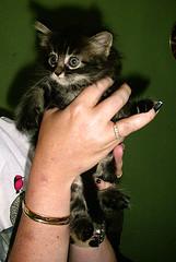 mad (tiny) Aliss