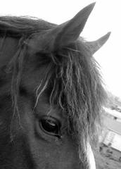 Gypsy #3 (EssjayNZ) Tags: 2005 newzealand bw horse eye field tag3 taggedout bay tag2 tag1 blaze gypsy essjaynz mane forelock taken2005