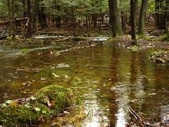 Collecting Pool (mikefurgang) Tags: hardrain tabortonroad river forest 214 backyard