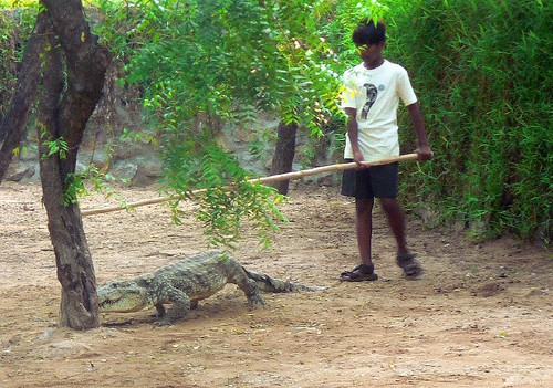 Tending crocodiles II