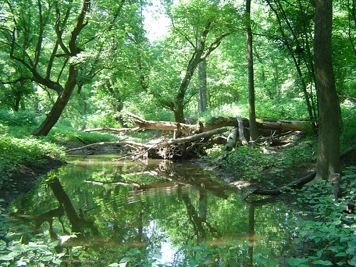 Darby Creek woodland