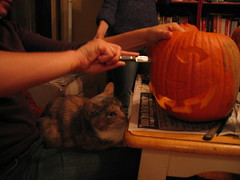 Kitty watching a little too closely (izatchu) Tags: halloween jackolanterns pumpkincarving