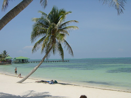 Belize Beach and Palm