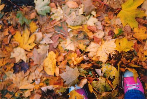 Come riciclare le foglie secche