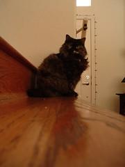 Ariel Stair Stare