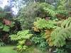 Hawaii 3 024 (jasonEscapist) Tags: hawaii bigisland hiiaka hiiakahouse garden