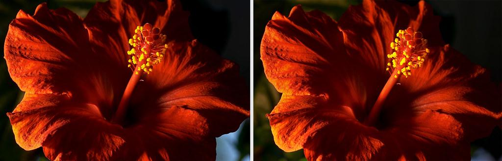3-D hibiscus flower