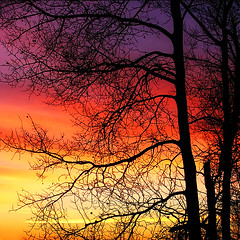 Auroral* (Imapix) Tags: voyage morning travel trees sunset canada art nature sunrise canon catchycolors wonder photography soleil photo bravo colorful foto photographie natural image quebec quality qubec favourites topv777 limbs topf100 favs coucherdesoleil imapix topfavpix 1500v40f gatangbourque gatanbourque copyright2006gatanbourqueallrightsreserved gaetanbourque abigfave pix50 pix100 100commentgroup imapixphotography gatanbourquephotography