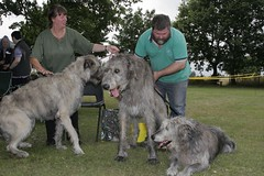 Fully under control (the_steve_cox) Tags: trees england irish dog man dogs grass three women day large quirky parr wolfhound irishwolfhound coxy irishwolfounds stevecox photoportunity photoportunitycom