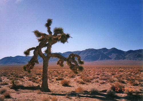 Song Joshua Tree The Joshua Tree u2