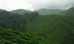 Tea plantation Cameron Highlands (Va1en2004) Tags: tea plantation cameron highlands