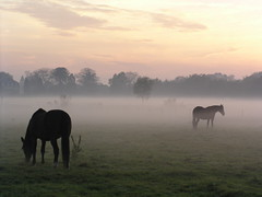 horses in the mist (e) Tags: fall albaluminis mist haze hazy misty horse horses nevel int searchthebest