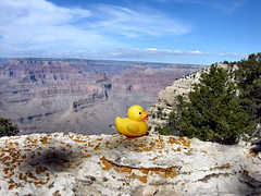 Ducky on the ledge.....Story at 10 (Bubba Trout) Tags: arizona tag3 taggedout interestingness tag2 tag1 grandcanyon grand canyon ducky allrightsreserved interestingness42 i500 allrightsreserved interestingness1500