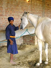 Nihang (photofixation) Tags: india horse stable amritsar indianarchive blue white