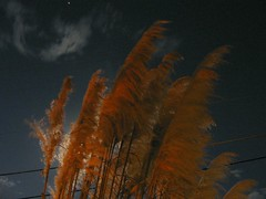 IMG_1823 (ednoles) Tags: moon house home grass night neighborhood moonlight pampas ilikegrass 35126 groupshowinclude
