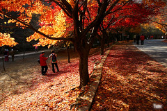 Maple Road (Yume_Love) Tags: korea maple road montain autumn fall