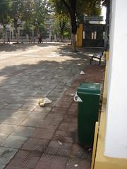 18.11.05.6.JPG (altoscolegios) Tags: altoscolegios basura padremanjn sevilla