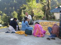 Op het dak bij Sander (mjrijnen) Tags: dhamakot mcleod ganji