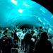 Georgia Aquarium_3