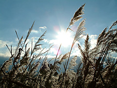 The sun in the fields (Spy to die 4) Tags: field sun sunny flare clear ilikegrass